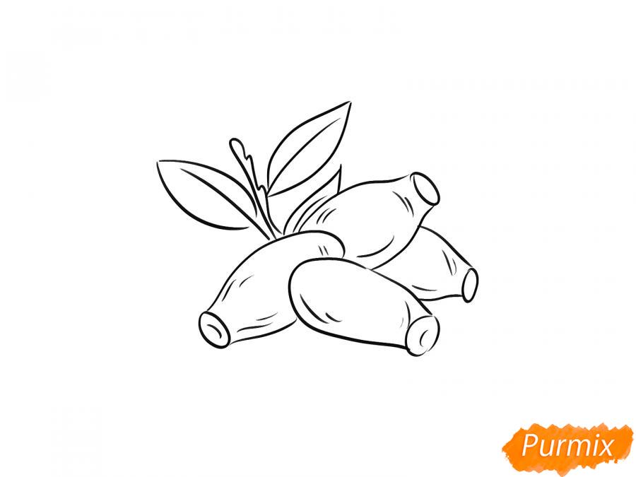 Рисуем жимолость карандашами - шаг 5