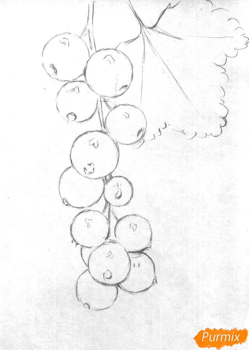 Рисуем гроздь смородины карандашами - шаг 1