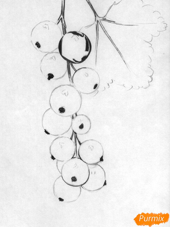 Рисуем гроздь смородины карандашами - шаг 2