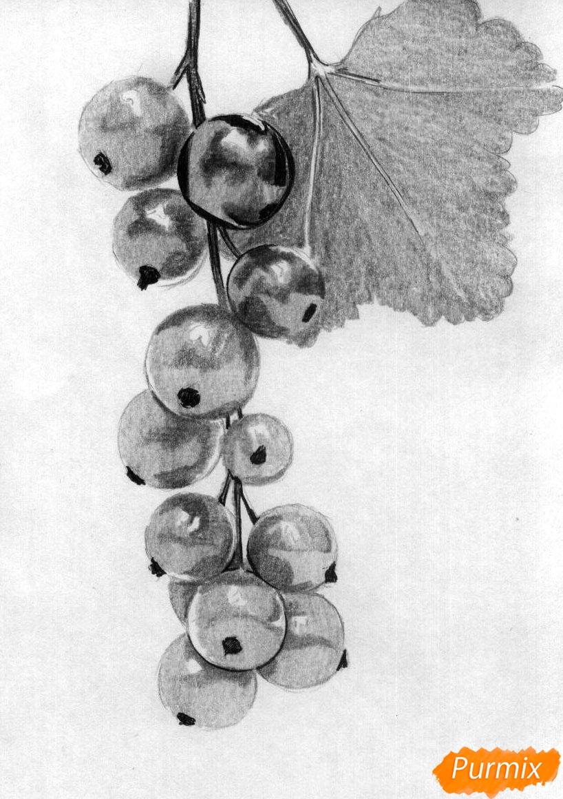 Рисуем гроздь смородины карандашами - шаг 4