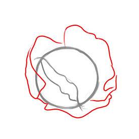 Рисуем Капусту - шаг 2