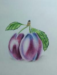 сливу цветными карандашами