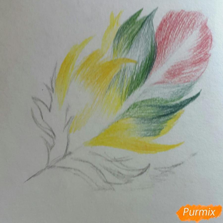 Рисуем перо цветными карандашами - шаг 3