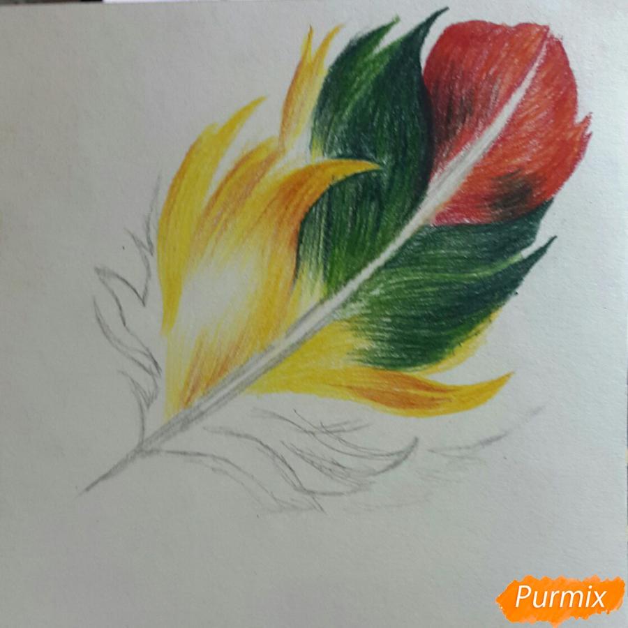 Рисуем перо цветными карандашами - шаг 5