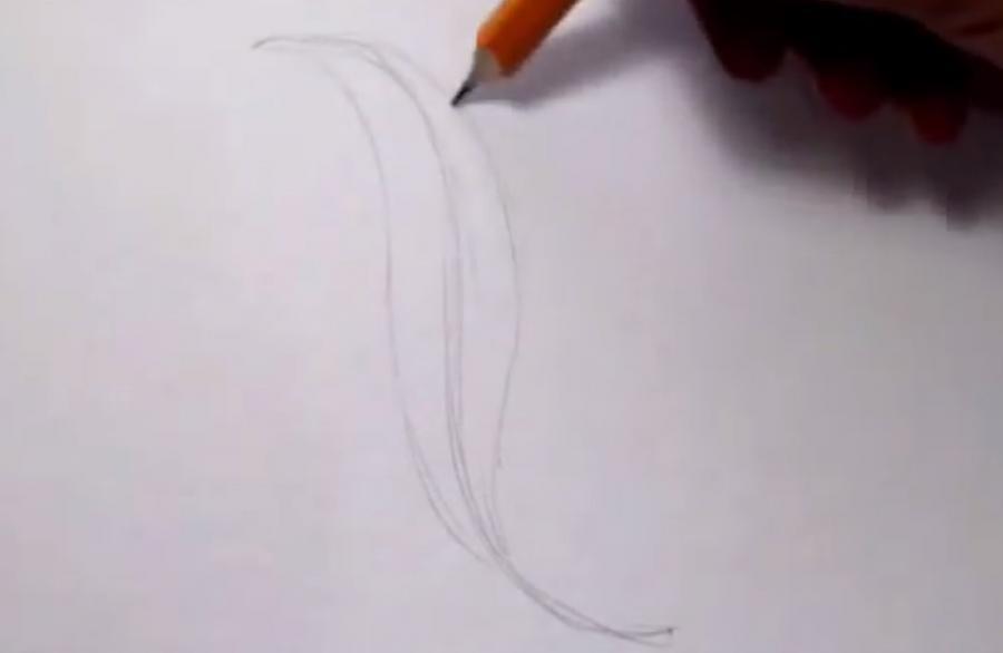 Как красиво нарисовать перо  на бумаге - шаг 1