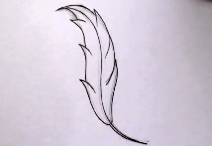 Как красиво нарисовать перо  на бумаге - шаг 3