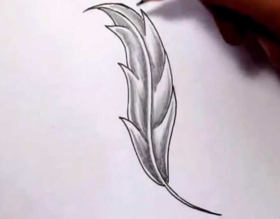 Как красиво нарисовать перо  на бумаге - шаг 5