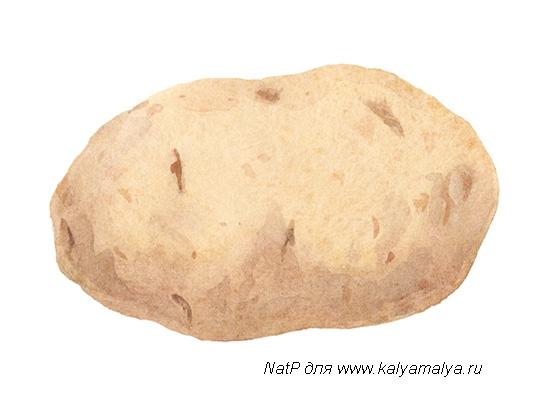 Учимся просто рисовать картофель - шаг 3