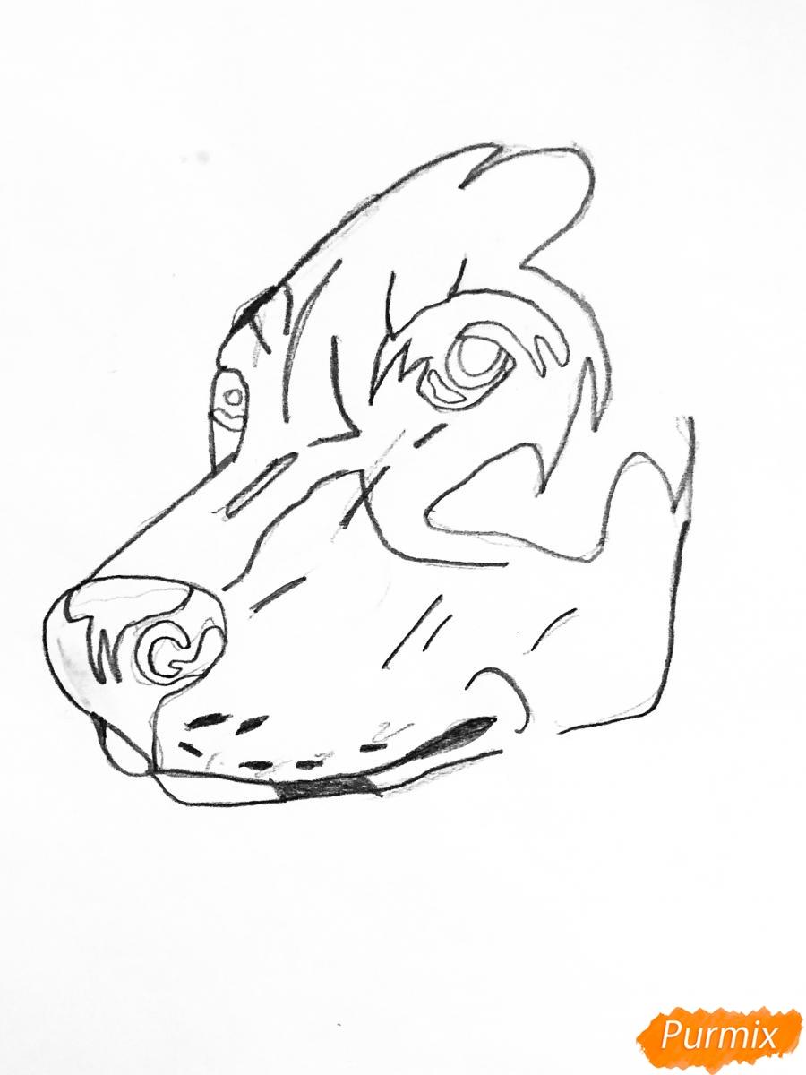 Рисуем собаку породы доберман в стиле тату - шаг 2