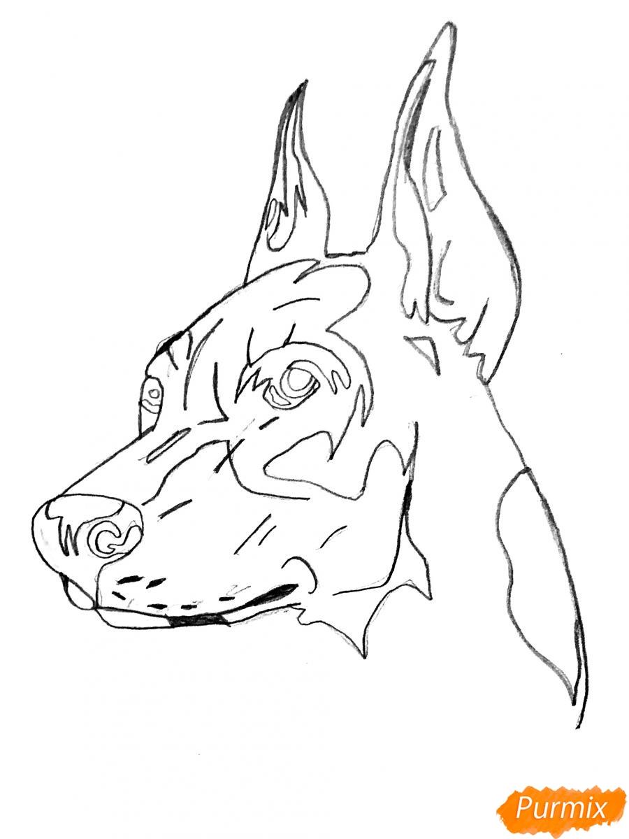 Рисуем собаку породы доберман в стиле тату - шаг 3