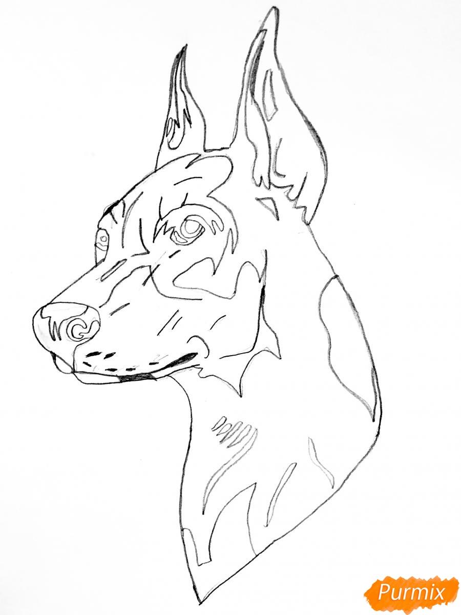 Рисуем собаку породы доберман в стиле тату - шаг 4