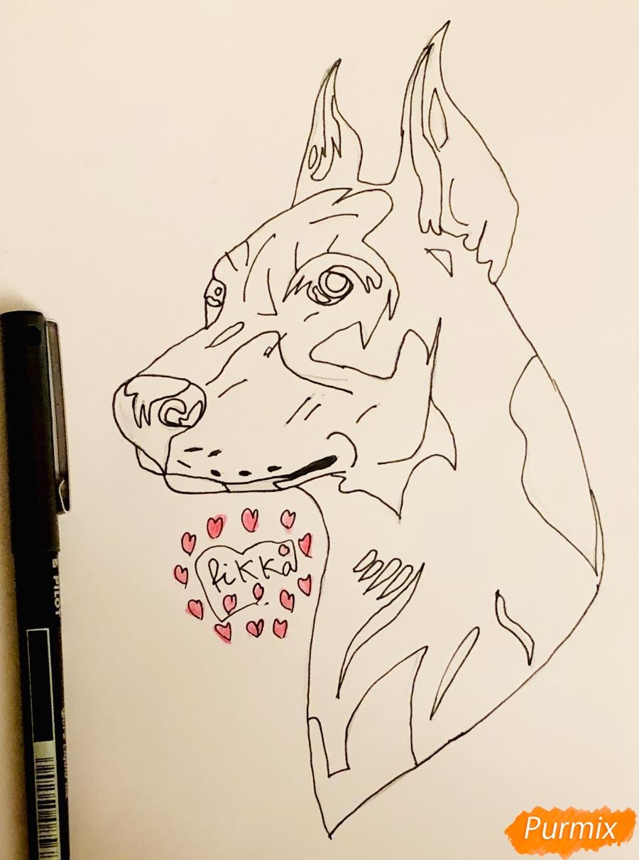 Рисуем собаку породы доберман в стиле тату - шаг 5