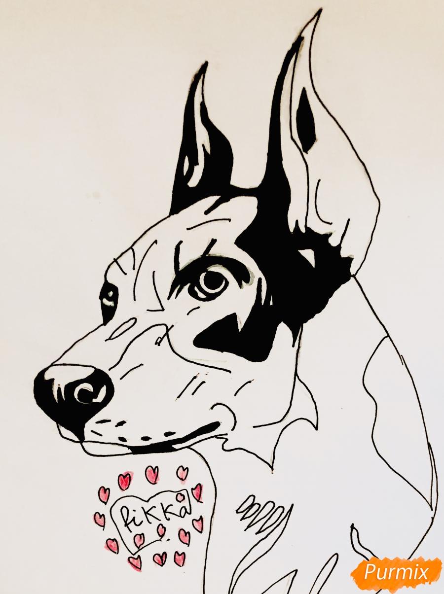 Рисуем собаку породы доберман в стиле тату - шаг 6