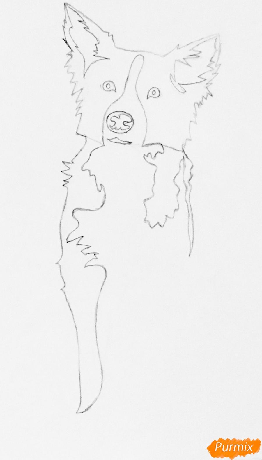 Рисуем тату собаку - шаг 3