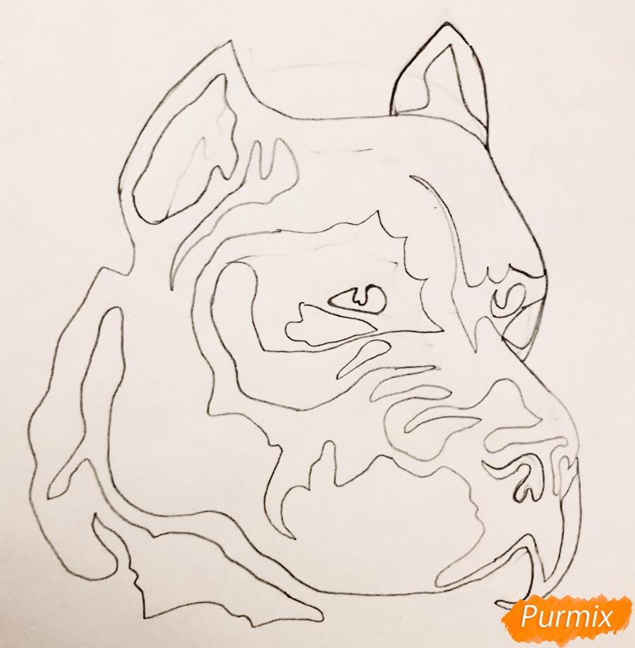 Рисуем стаффордширского терьера в стиле тату - шаг 3