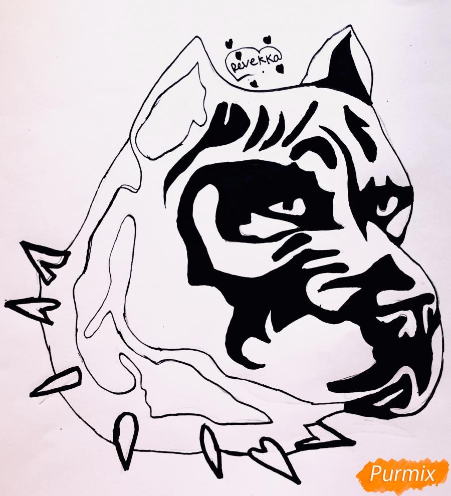 Рисуем стаффордширского терьера в стиле тату - шаг 7
