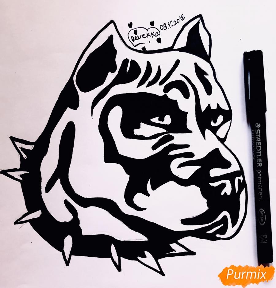 Рисуем стаффордширского терьера в стиле тату - шаг 8