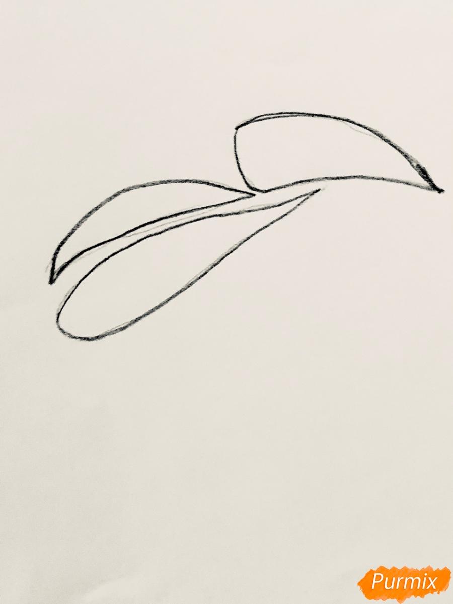 Рисуем тукана в стиле тату - шаг 1