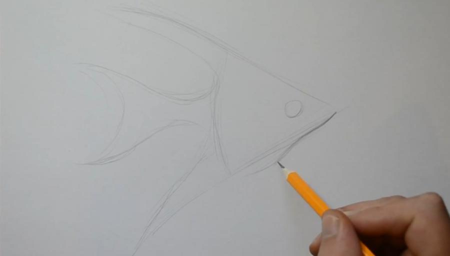 Рисуем рыбу Скалярию в стиле тату - шаг 2