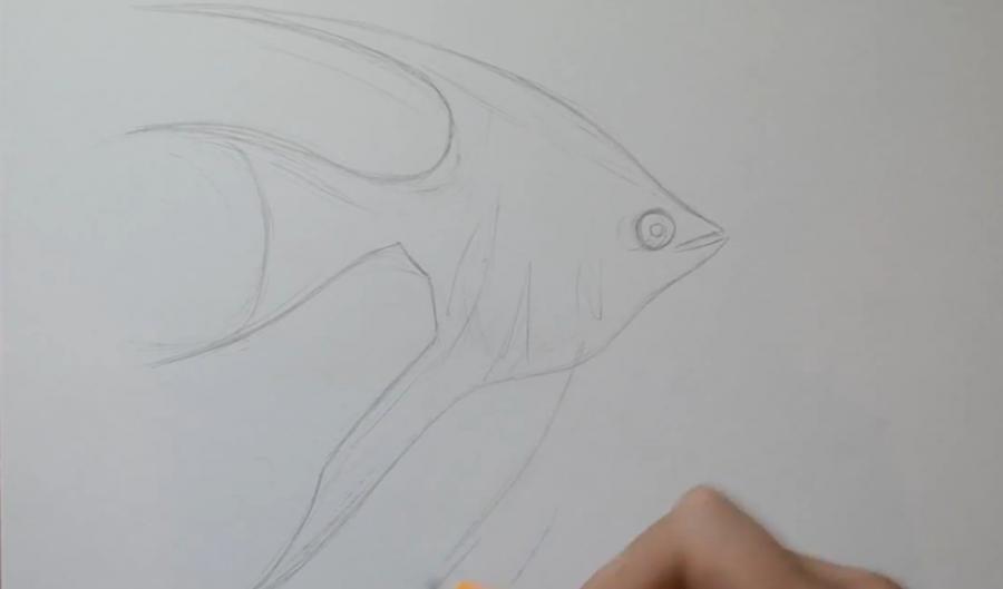 Рисуем рыбу Скалярию в стиле тату - шаг 3