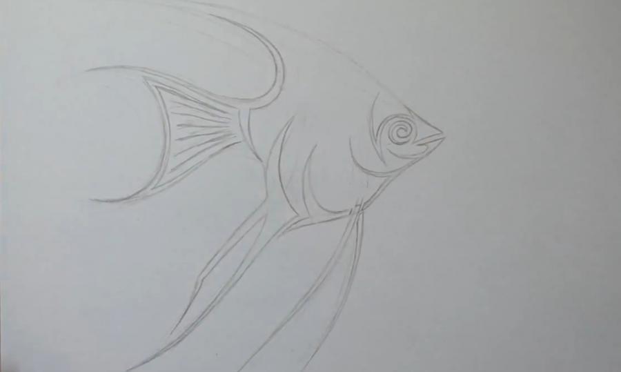 Рисуем рыбу Скалярию в стиле тату - шаг 4