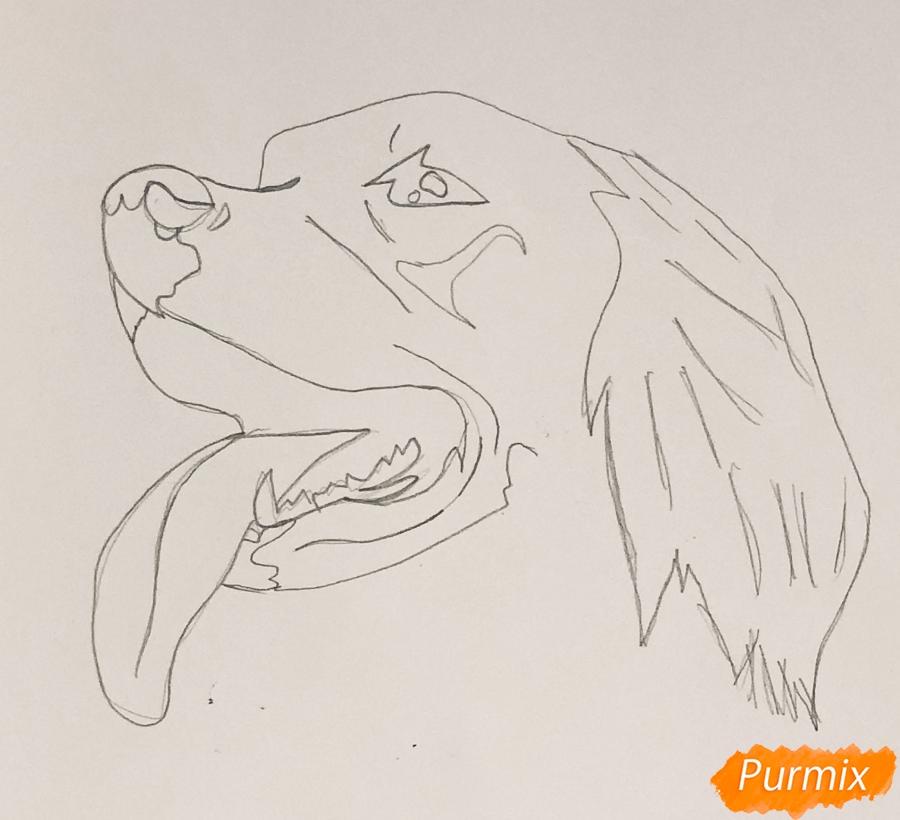 Рисуем собаку породы Сеттер в стиле тату - шаг 2