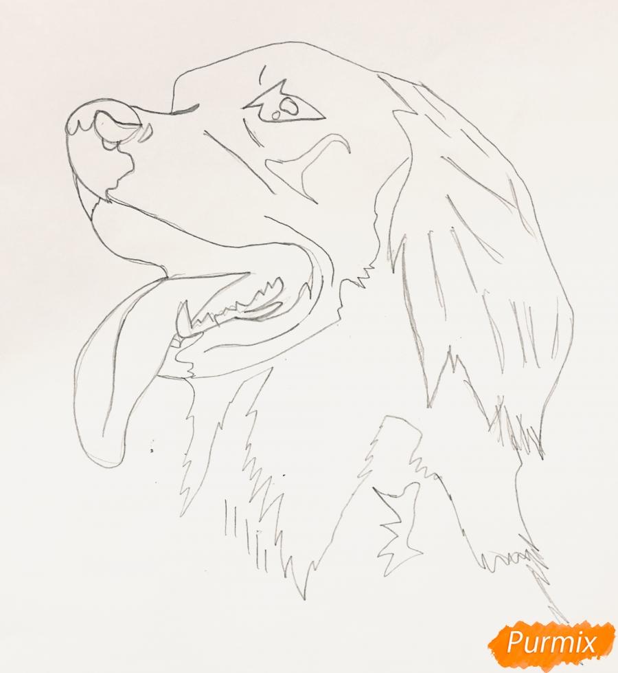 Рисуем собаку породы Сеттер в стиле тату - шаг 3