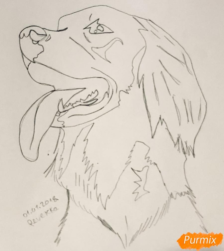 Рисуем собаку породы Сеттер в стиле тату - шаг 4