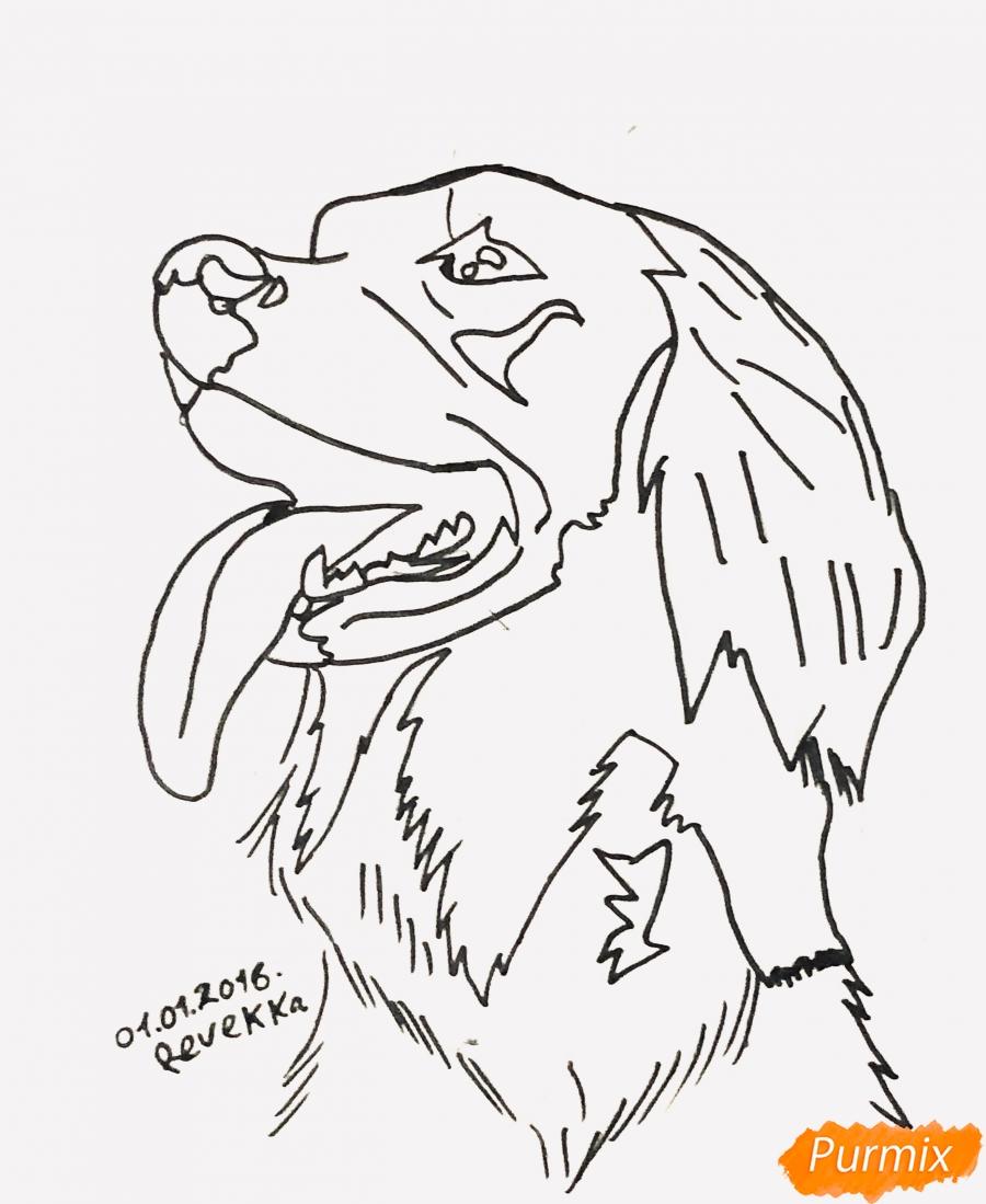 Рисуем собаку породы Сеттер в стиле тату - шаг 5