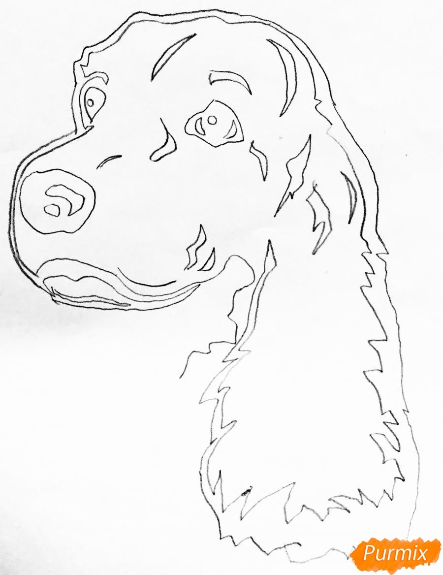Рисуем собаку породы спаниель в стиле тату - шаг 2