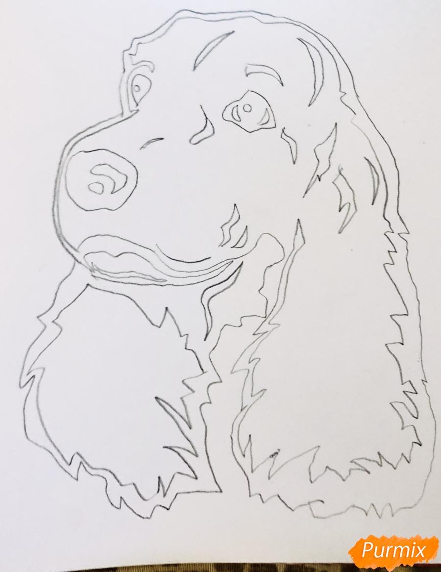 Рисуем собаку породы спаниель в стиле тату - шаг 3