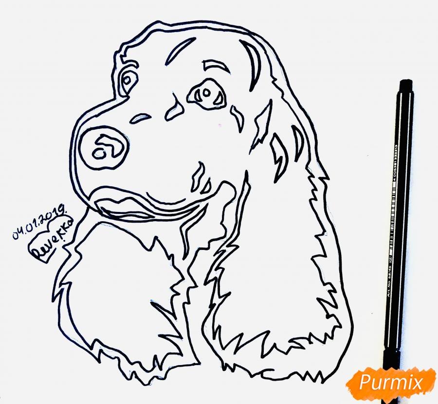 Рисуем собаку породы спаниель в стиле тату - шаг 4