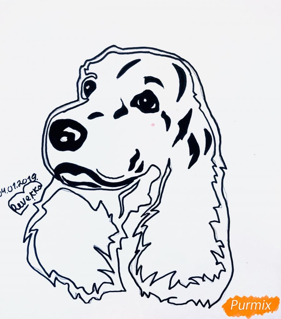 Рисуем собаку породы спаниель в стиле тату - шаг 5
