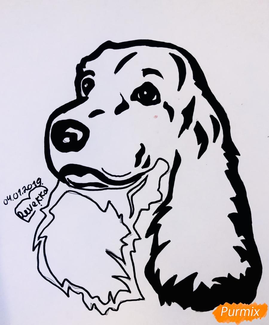 Рисуем собаку породы спаниель в стиле тату - шаг 6