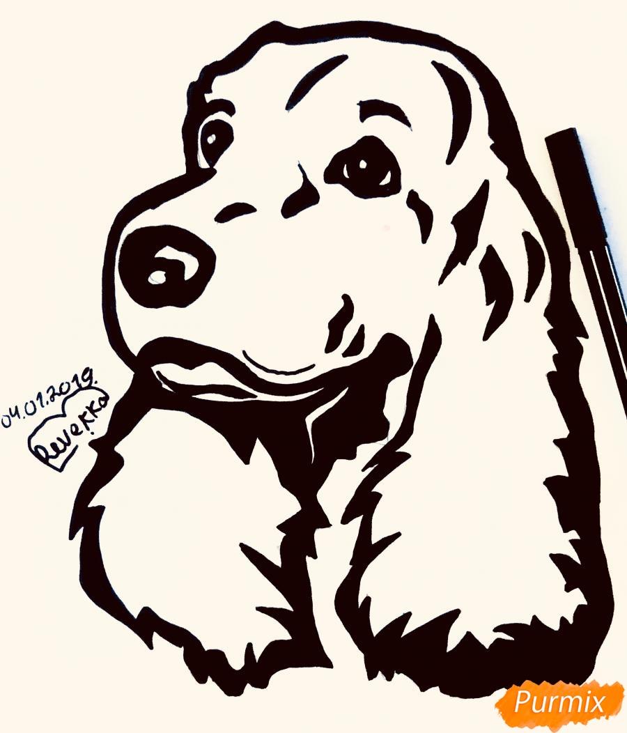 Рисуем собаку породы спаниель в стиле тату - шаг 7