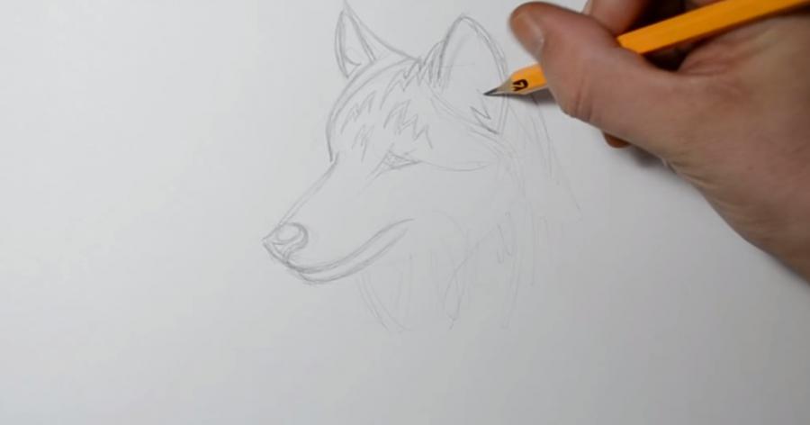Учимся рисовать голову волка в стиле тату на бумаге - шаг 4