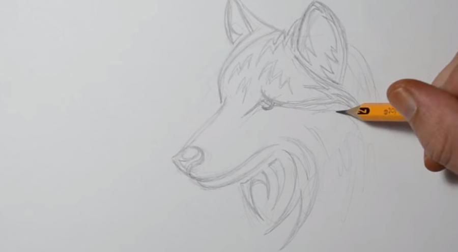 Учимся рисовать голову волка в стиле тату на бумаге - шаг 5