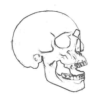 Рисуем череп человека - шаг 4