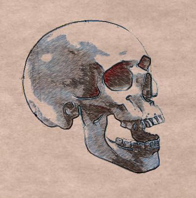 Рисуем череп человека - шаг 7