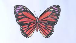 бабочку цветными карандашами видео