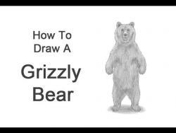 Фото медведя на двух лапах карандашом  урок
