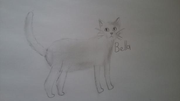 Фото Bella-The-Cat к уроку